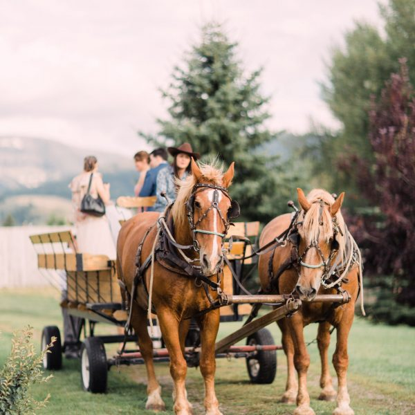 Hart Ranch Wedding's hay wagon pulled by two buckskin colored horses